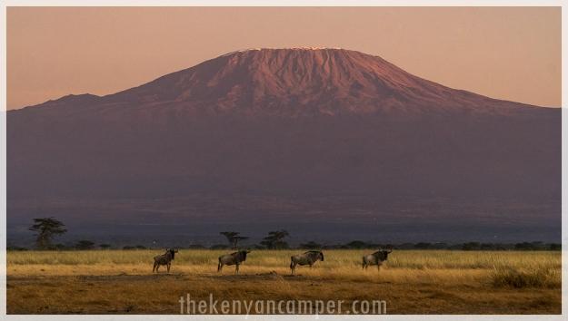 kimana-sanctuary-amboseli-kenya-111