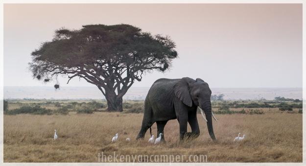 kimana-sanctuary-amboseli-kenya-25