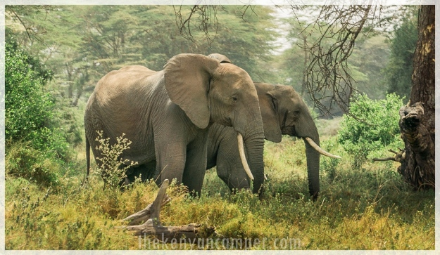 kimana-sanctuary-amboseli-kenya-4
