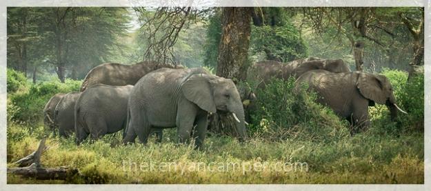 kimana-sanctuary-amboseli-kenya-7