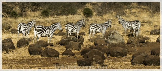 kimana-sanctuary-amboseli-kenya-70
