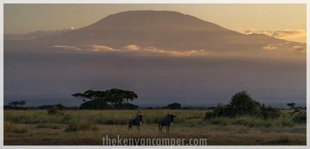 kimana-sanctuary-amboseli-kenya-88